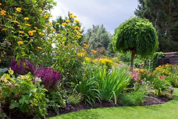 Perennials vs. Annuals:  It's a Commitment Issue